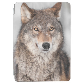 Grey Wolf (Canis lupus) With One Ear Back iPad Air Cover