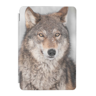 Grey Wolf (Canis lupus) With One Ear Back iPad Mini Cover