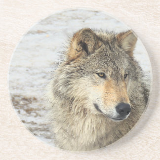 Grey Wolf Drink Coaster