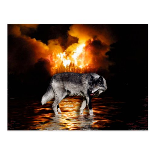 Grey Wolf & Forest Fire Wildlife Photo Postcards