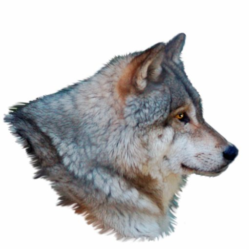 GREY WOLF HEAD Wildlife Art Sculpted Gift Item Photo Cut Outs