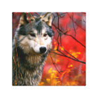 Grey Wolf in Beautiful Red and Yellow Foliage Canvas Print