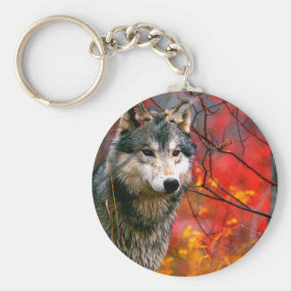 Grey Wolf in Beautiful Red and Yellow Foliage Key Ring