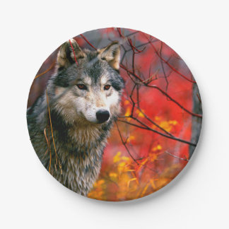 Grey Wolf in Beautiful Red and Yellow Foliage Paper Plate