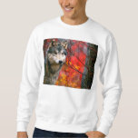 Grey Wolf in Beautiful Red and Yellow Foliage Pullover Sweatshirts