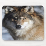 Grey Wolf Mouse Pad