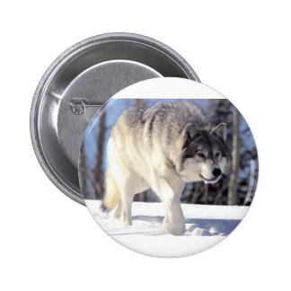 Grey Wolf On The Prowl 6 Cm Round Badge