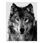Grey Wolf Poster Print