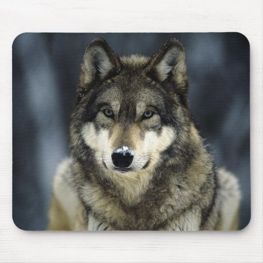 grey-wolf-snow mouse pad