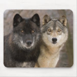 Grey Wolves Mouse Pad
