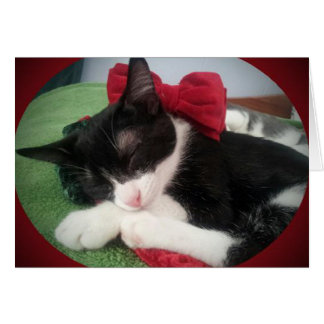 Greyfoot Cat Rescue Black & White Holiday Card