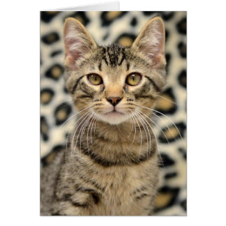 Greyfoot Cat Rescue Brown Tabby Card