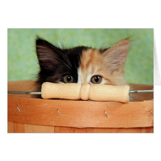 Greyfoot Cat Rescue Calico Kitten Card