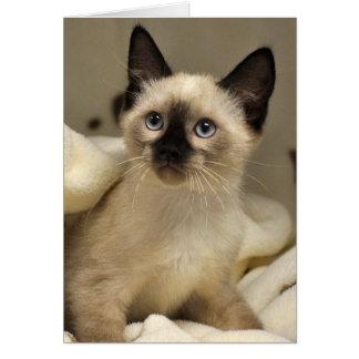 Greyfoot Cat Rescue Siamese Kitten Card