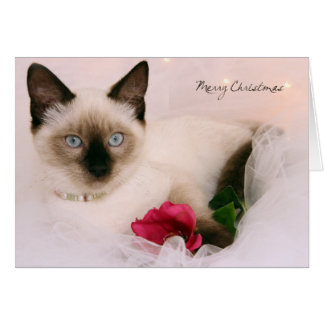 Greyfoot Cat Rescue Siamese Merry Christmas Card