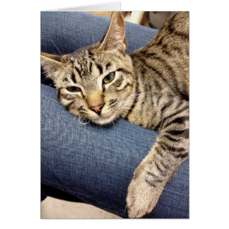 Greyfoot Cat Rescue Silver Grey Tabby Card