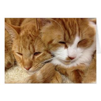 Greyfoot Cat Rescue Sleepy Kitties Card