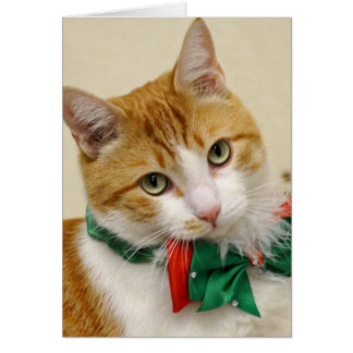 Greyfoot Cat Rescue Tabby Christmas Greeting Card