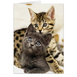 Greyfoot Cat Two Cute Kittens Greeting Card