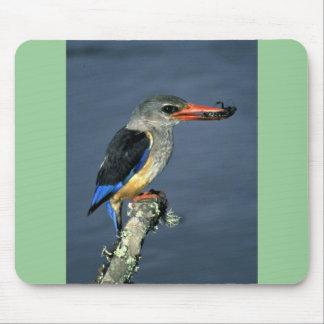 Greyhooded Kingfisher Mousepads