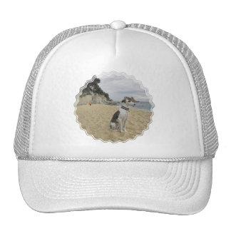 Greyhound Baseball Hat