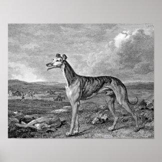 Greyhound Black and White Illustration Print