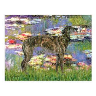 Greyhound (br8) - Lilies 2 Postcard