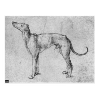 Greyhound by Albrecht Durer Postcard