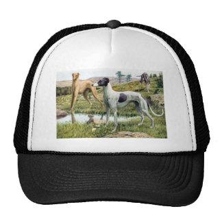 Greyhound Cap