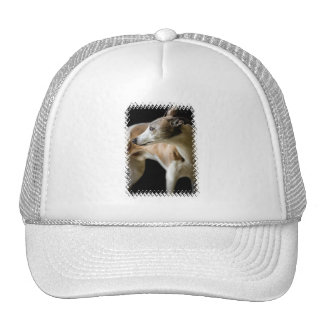 Greyhound Dog  Baseball Hat