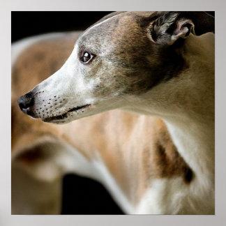 Greyhound Dog  Poster
