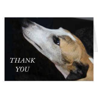 Greyhound Dog Thank You Card
