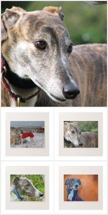 Greyhound jigsaw puzzles