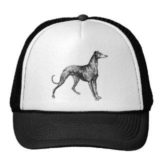 greyhound merchandise cap