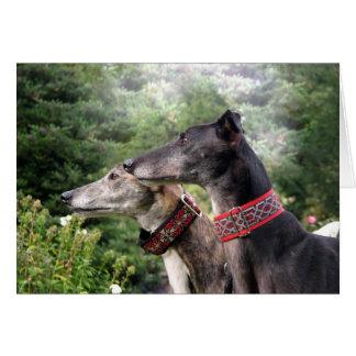 Greyhound on the alert card