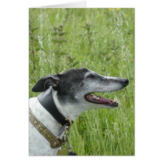 Greyhound photocard (p377) card