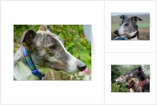 Greyhound photocards