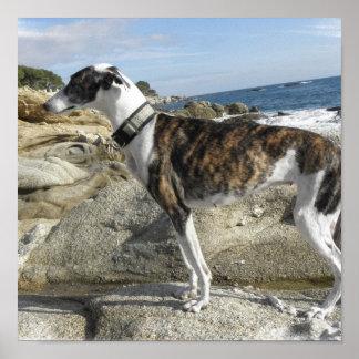 Greyhound Photograph Printer Print