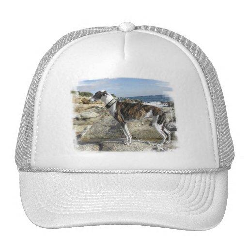Greyhound Photographs Baseball Hat