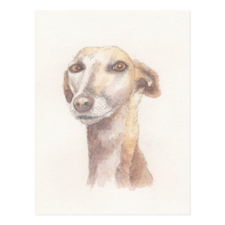 Greyhound portrait postcard