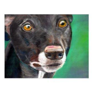Greyhound postcard (a411) title=