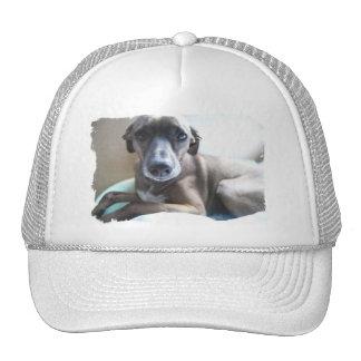 Greyhound Puppy Baseball Hat