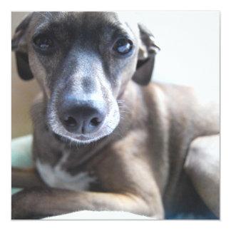 Greyhound Puppy Dog Invitation