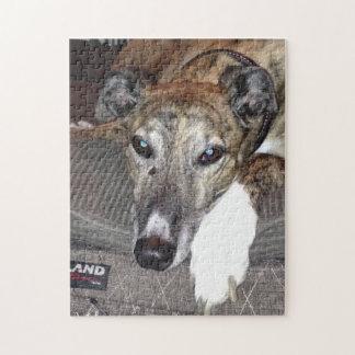 Greyhound Puzzle