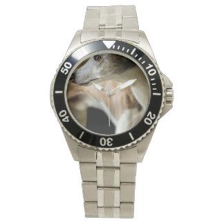 Greyhound Watch