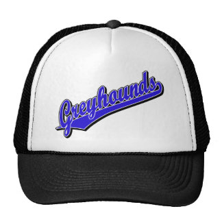 Greyhounds in Blue Mesh Hats