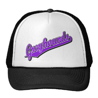 Greyhounds in Purple Hats
