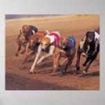 Greyhounds racing on track