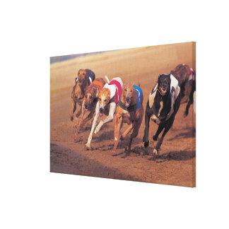 Greyhounds racing on track canvas print