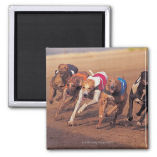 Greyhounds racing on track square magnet